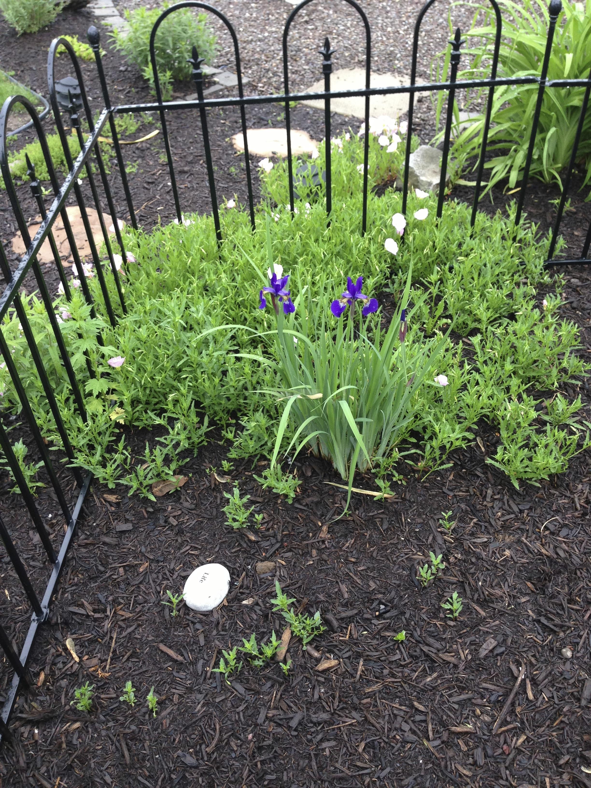 Beginnings of a New Garden
